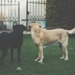 Je tuin en interieur hondvriendelijk inrichten doe je zo