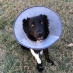 Zorgen voor een zieke hond